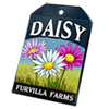 6228-daisy-seed-packet.png