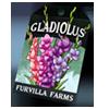 6229-gladiolus-seed-packet.png