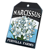 6234-narcissus-seed-packet.png