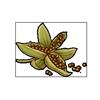 6248-violet-seeds.png