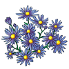 6249-aster.png