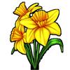 6251-daffodil.png