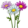 6252-daisy.png