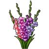 6253-gladiolus.png