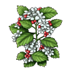 6254-hawthorn.png