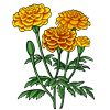 6256-marigold.png