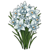 6258-narcissus.png