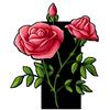 6259-rose.png