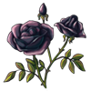 6415-black-rose.png