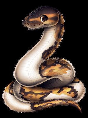118-21-piebald-ball-python.png