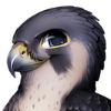 24-9-peregrine-falcon-th.png