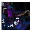 612-white-tipped-hummingbird.png