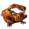 3410-leaf-tailed-gecko.png