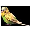 4217-light-green-opaline-budgie.png