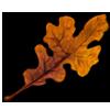 5491-post-oak-leaf.png