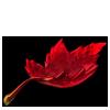 5492-maple-leaf.png