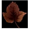 5493-hawthorn-leaf.png