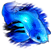 7025-ghost-koi.png