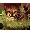 7037-hidden-cheetah-cub.png